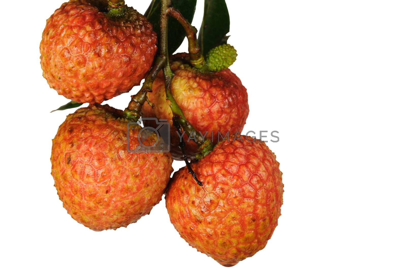 Litchi with green leaves isolated on white background