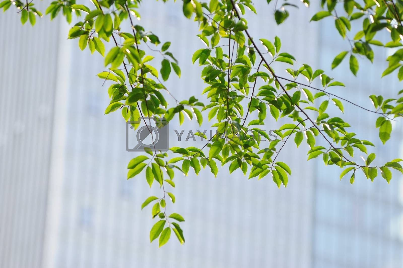 A bunch of green leaves on the tree