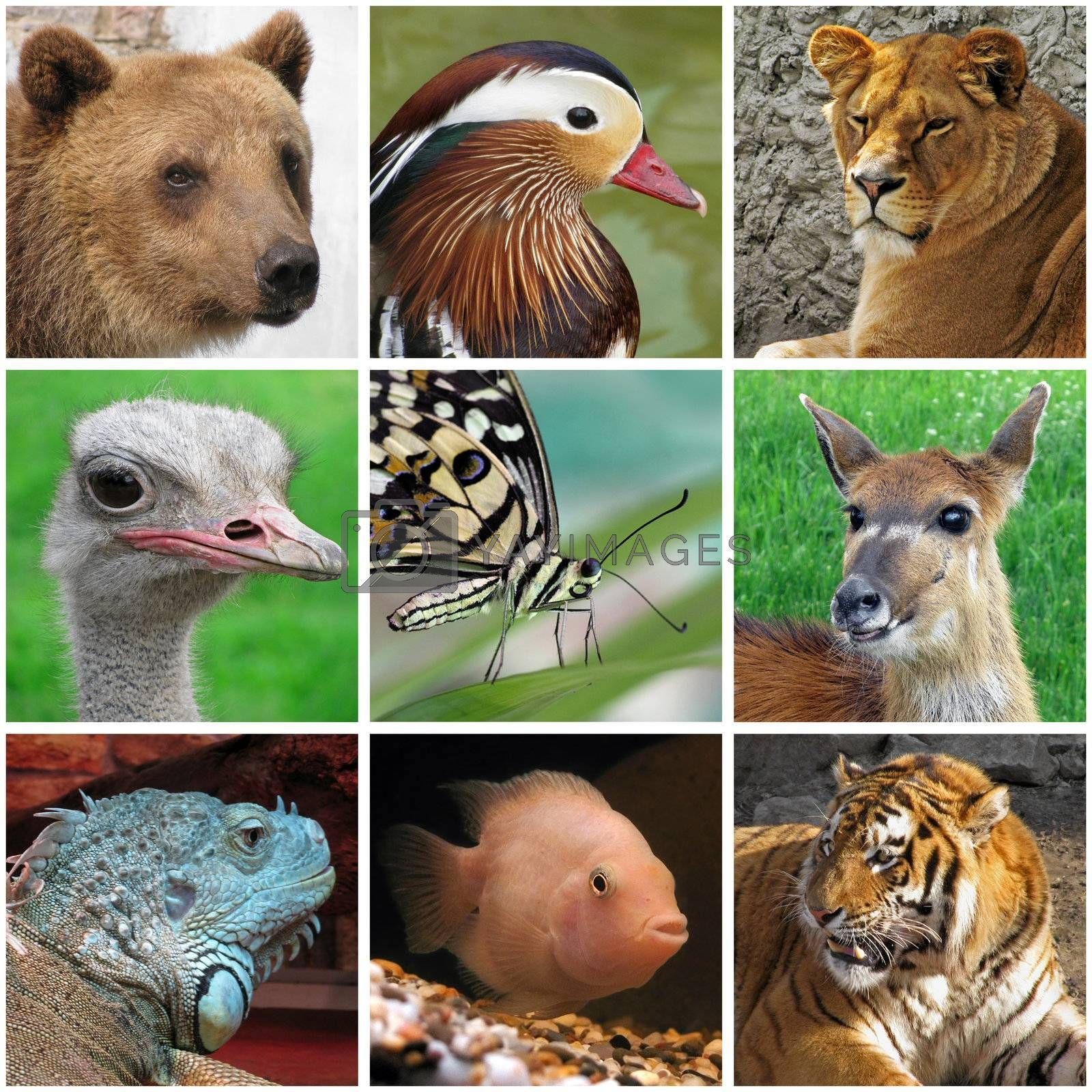 collage with animals from zoo