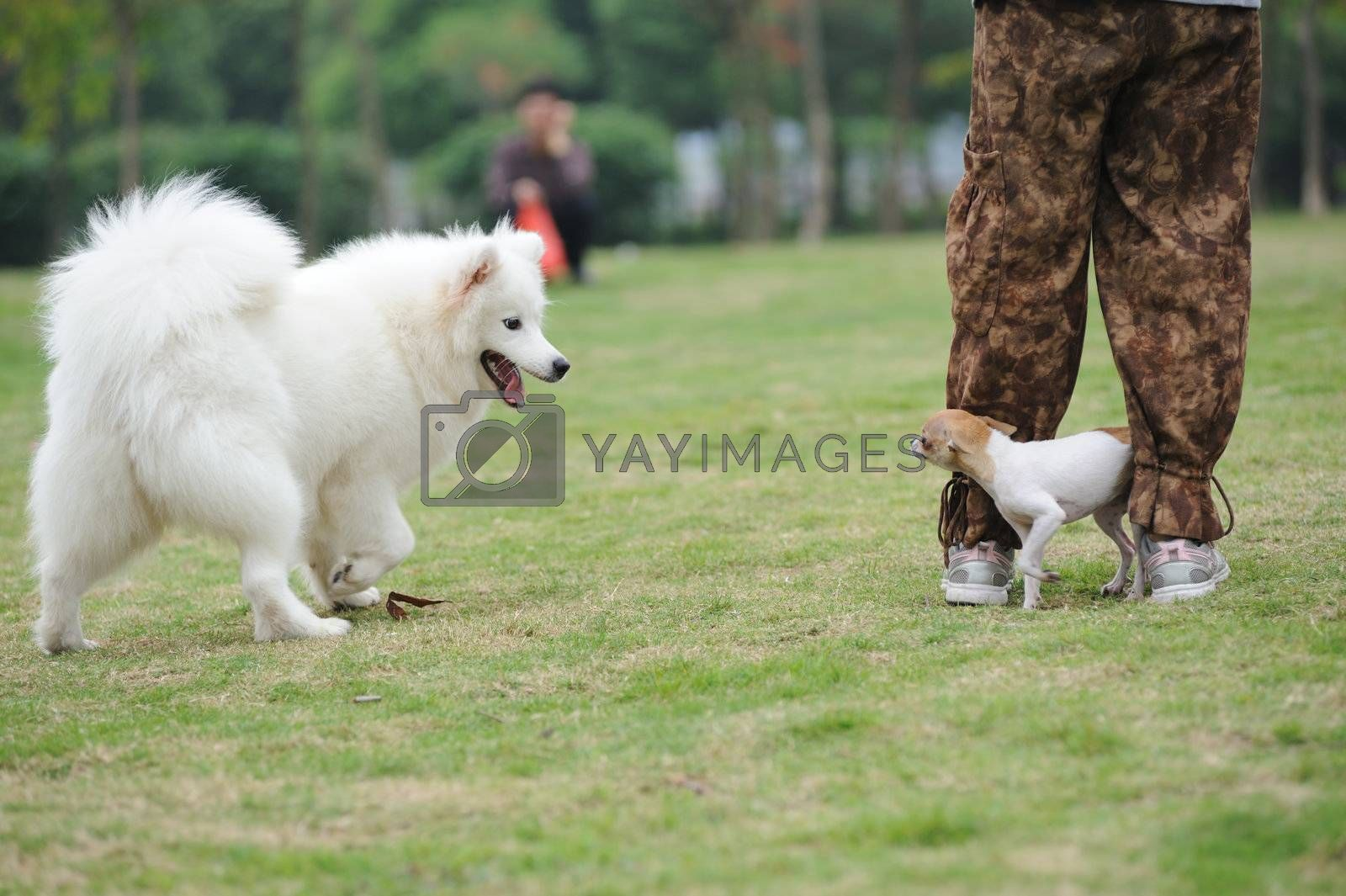 Two dogs playing by raywoo