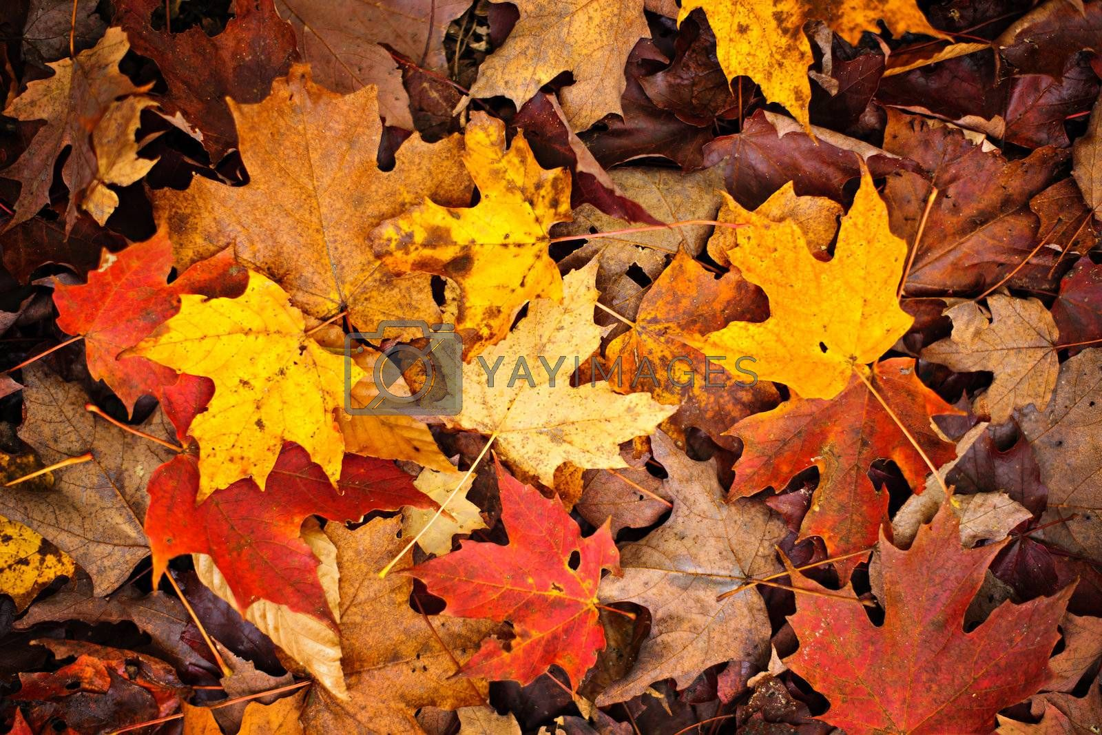 Background of colorful autumn leaves on forest floor