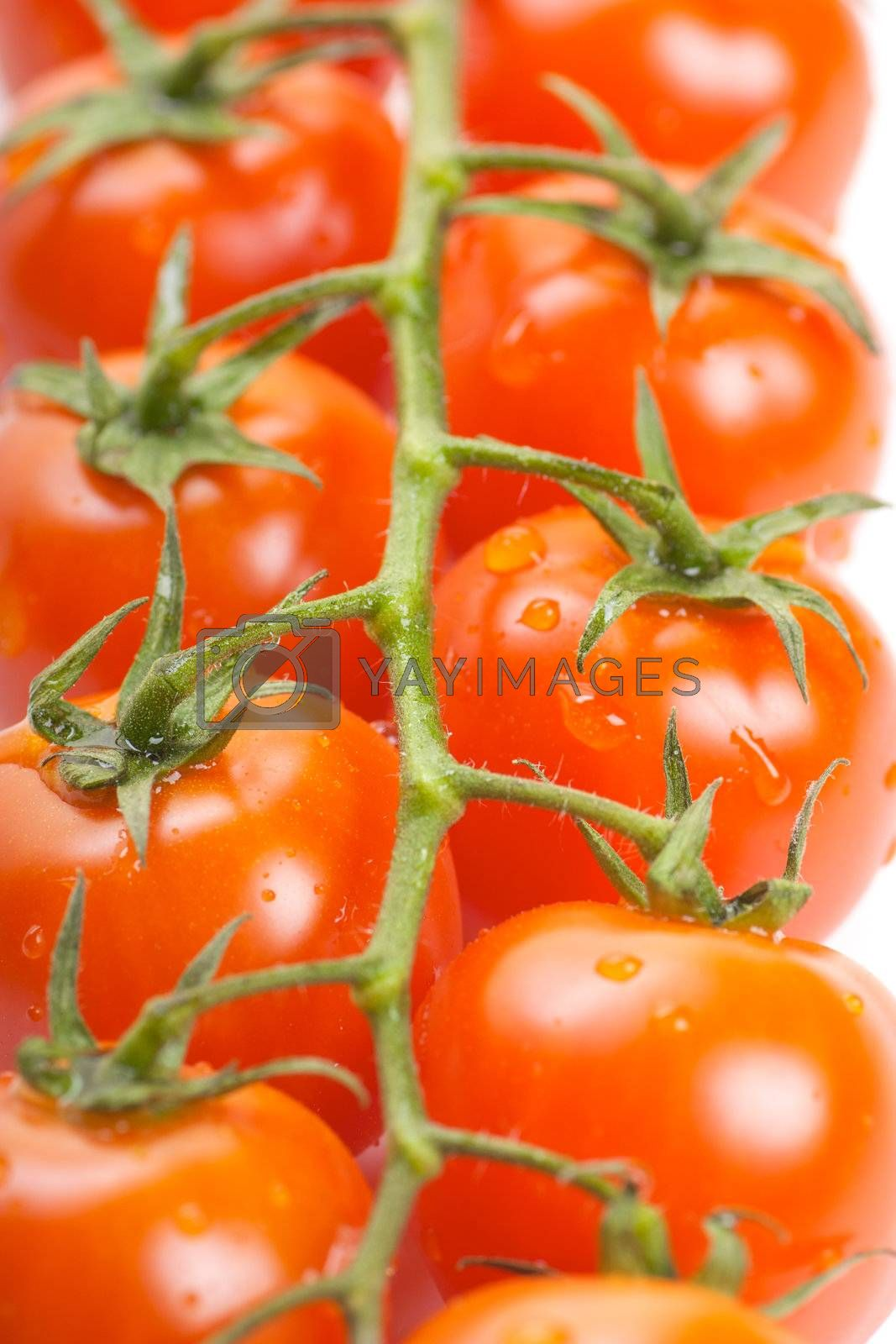 Closeup view of fresh ripe cherry tomatoes on a branch