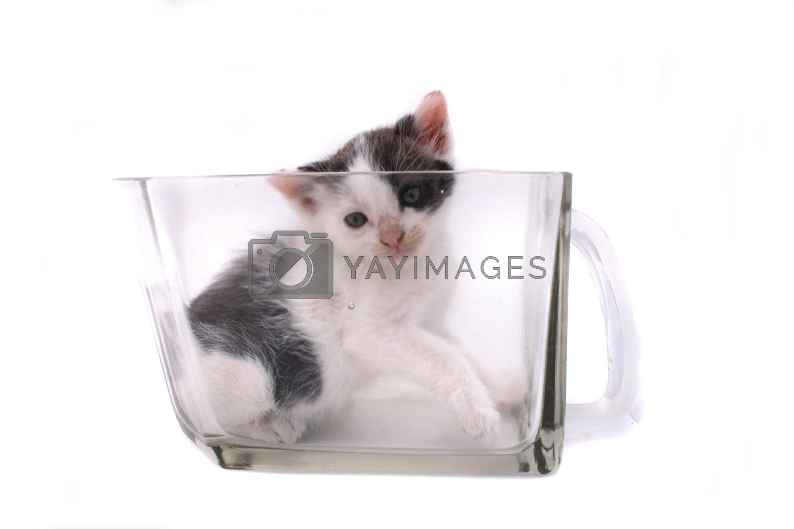 small cat in the glass on the white background