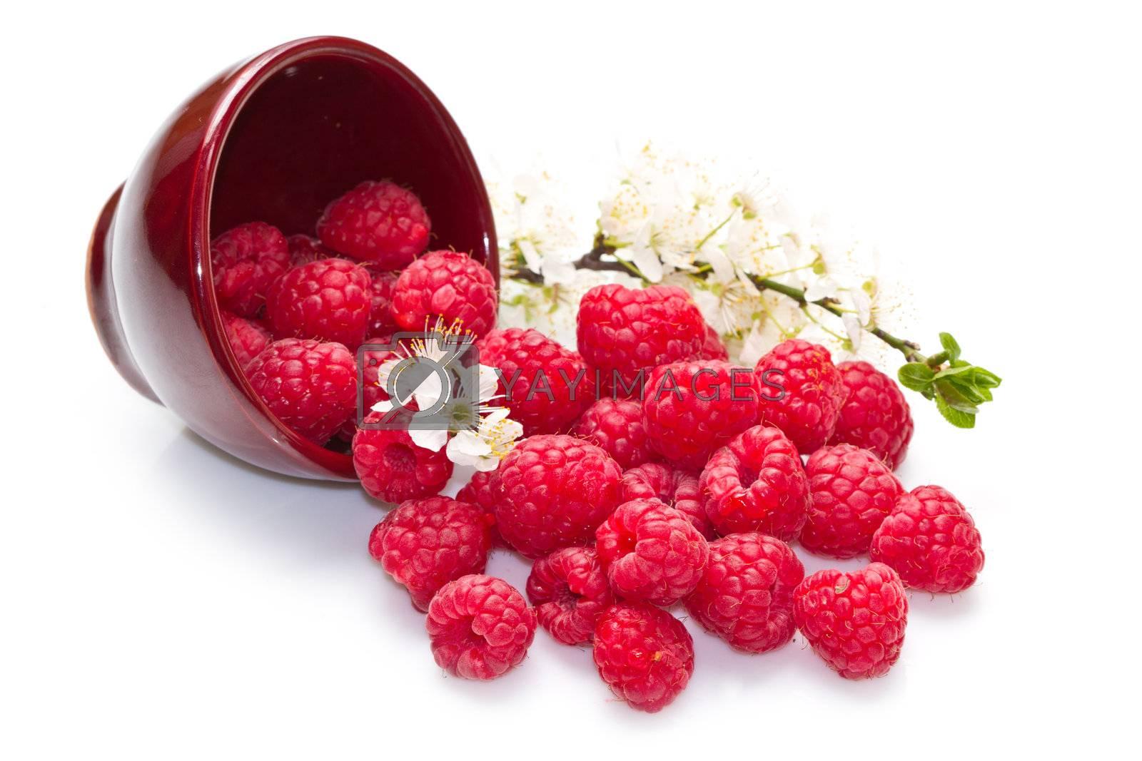 fresh raspberries scattered on white background