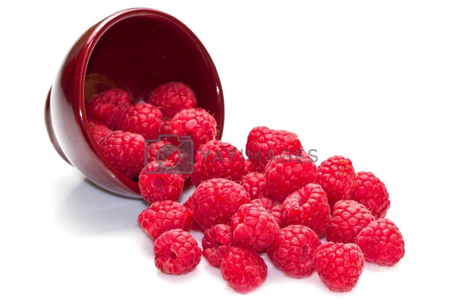 fresh raspberries scattered on white background