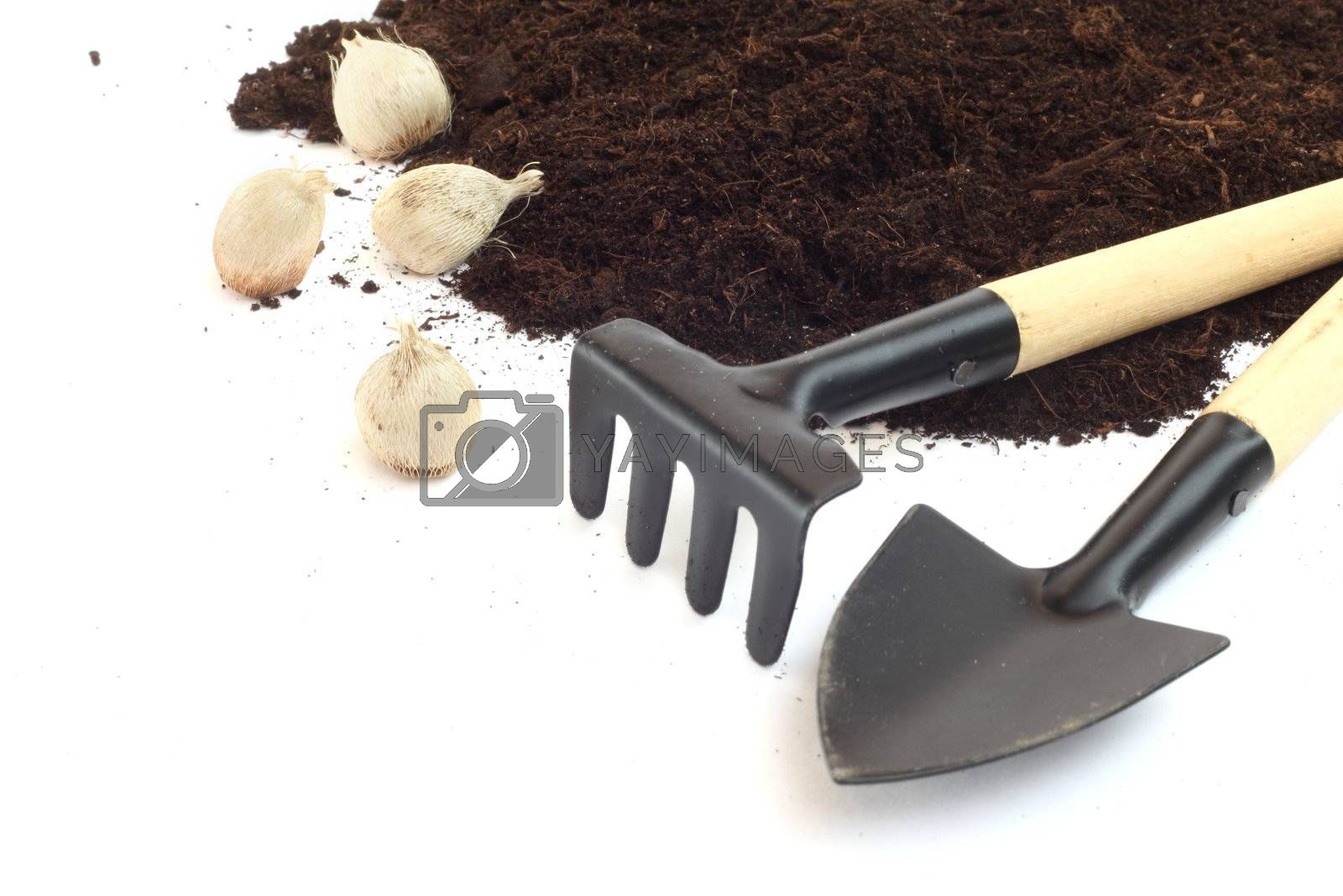 Gardening tools and flower bulbs isolated on white