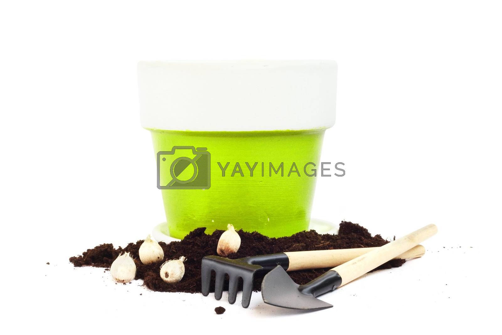 Gardening tools, flower bulbs and pot  isolated on white