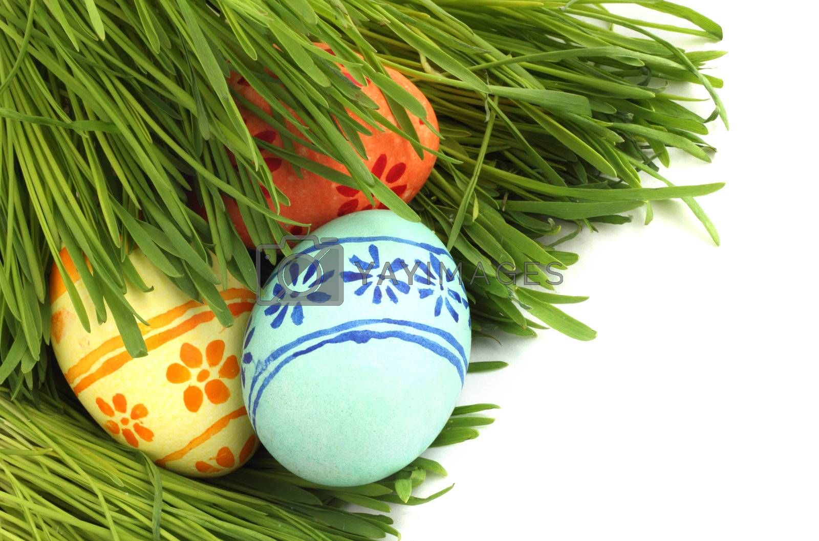 Easter eggs in green spring grass on white background
