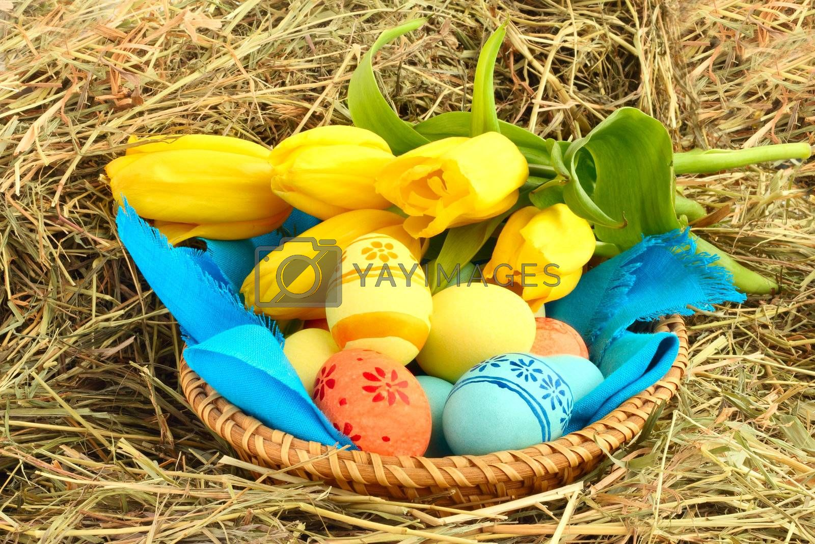 Basket of colored easter eggs and tulips on hay