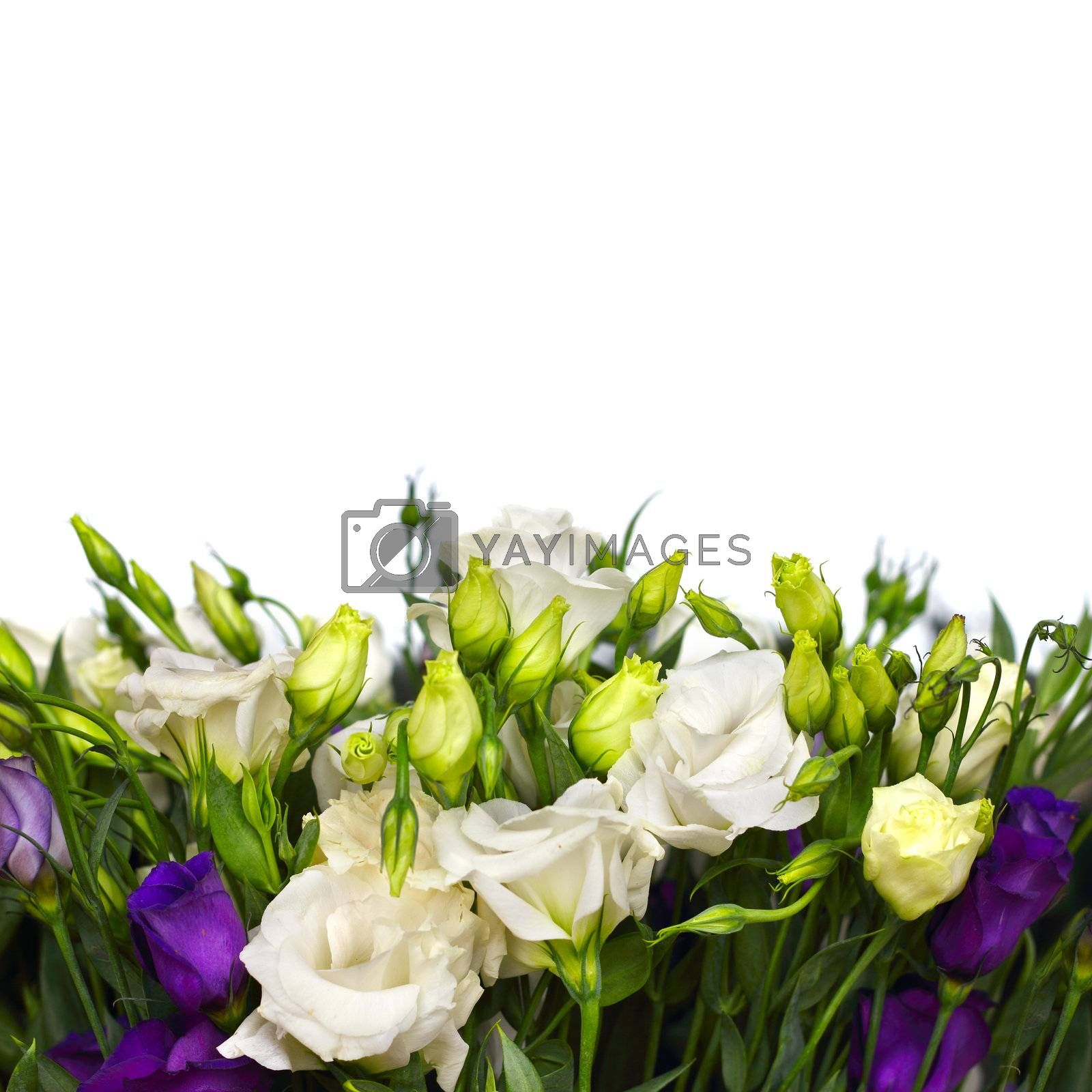 bouquet of white and violet lisianthus flowers on white