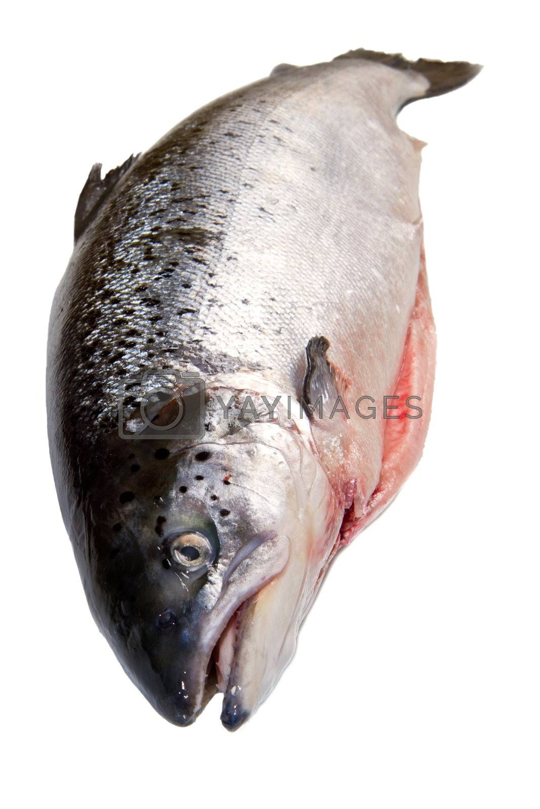 Whole salmon isolated on white