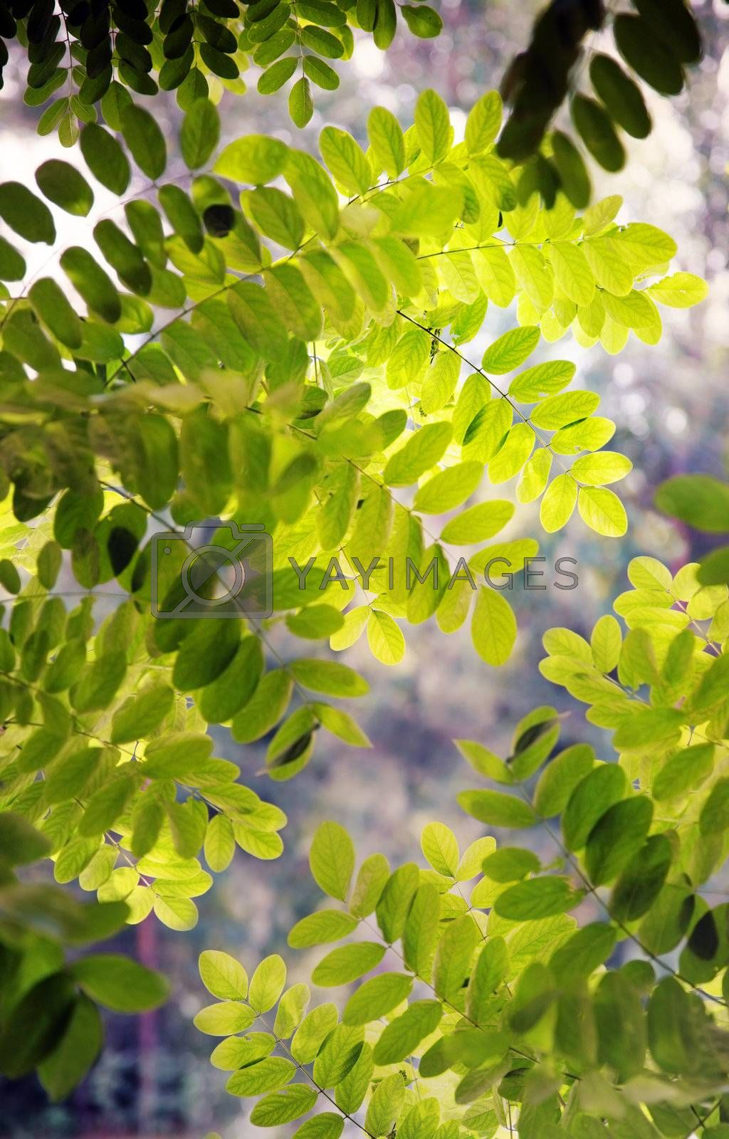 Green leaves outdoors during spring day