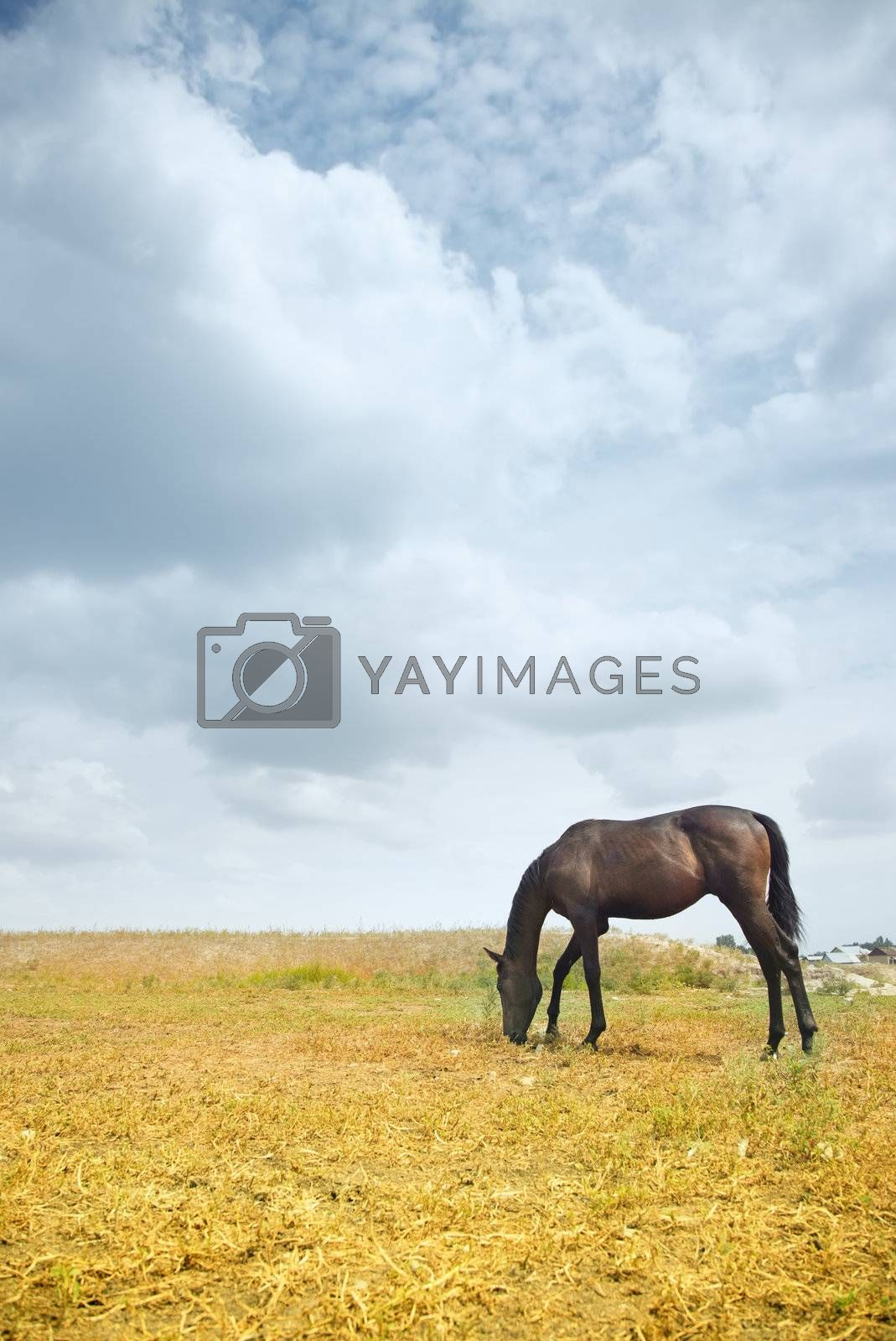 Horse by Novic