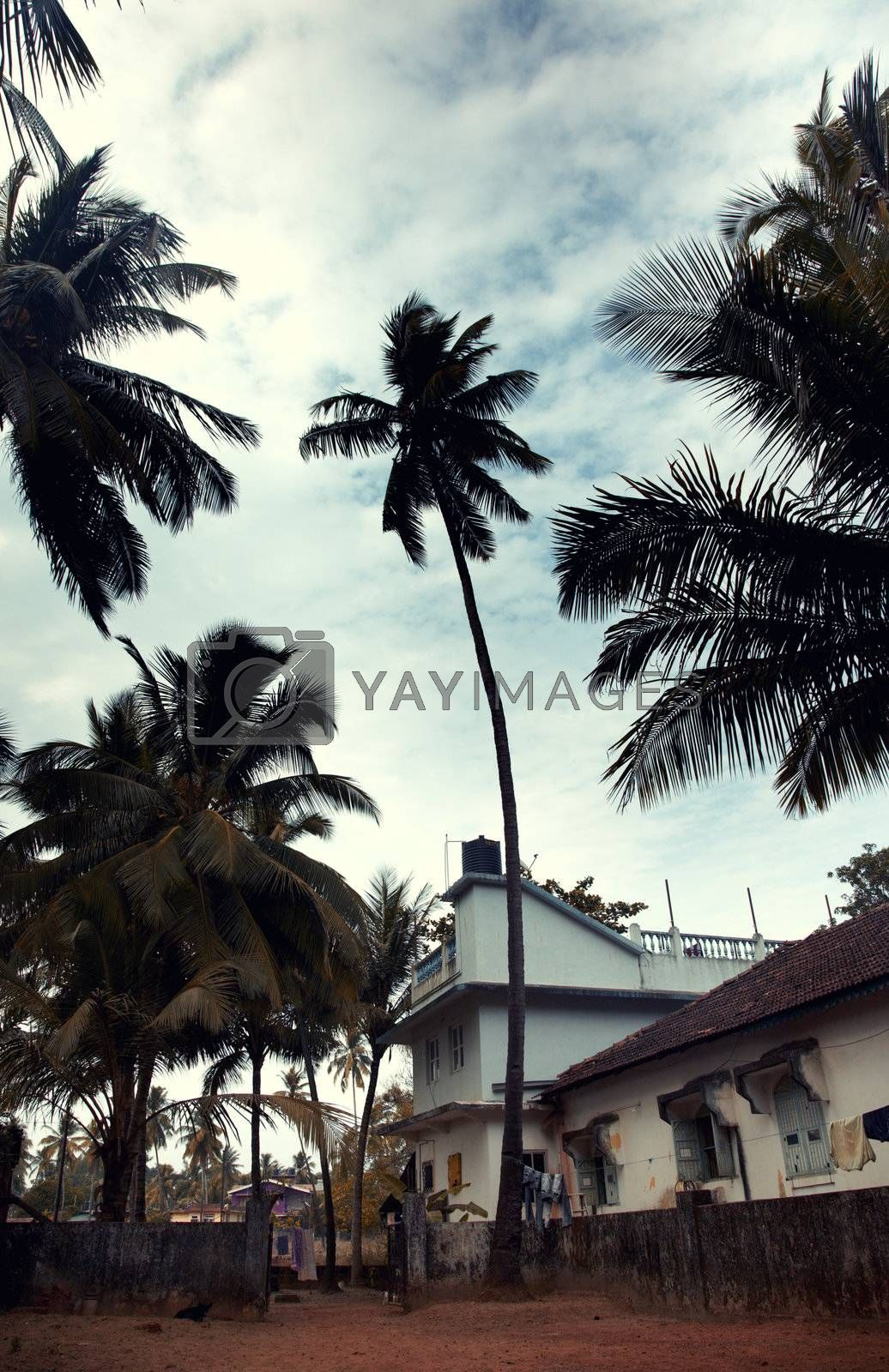 Small hotels in the tropical place with palms
