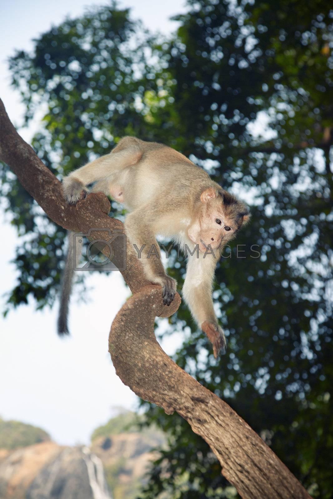 Wild monkey scrambling in jungles. Close-up vertical photo