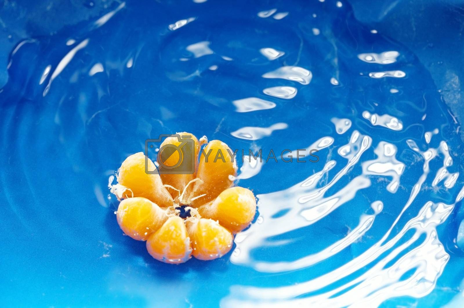 Close-up photo of the orange mandarin on a blue water background