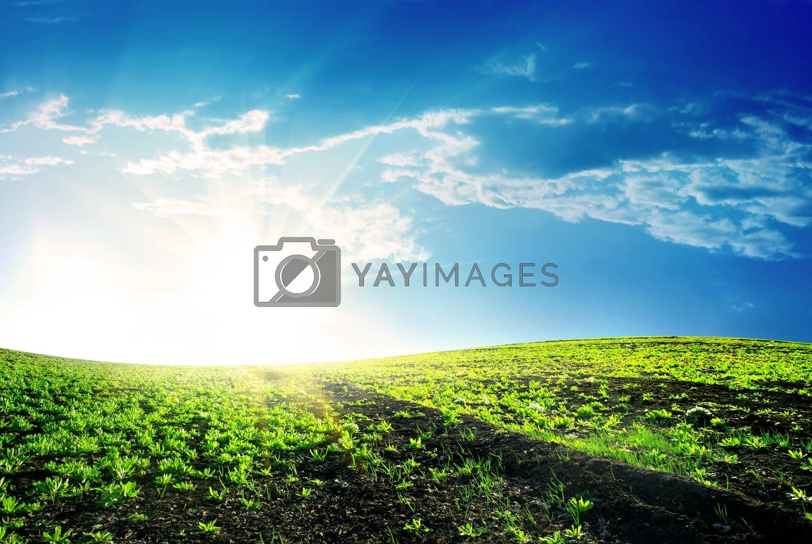 Spring meadow with green grass and bright sun