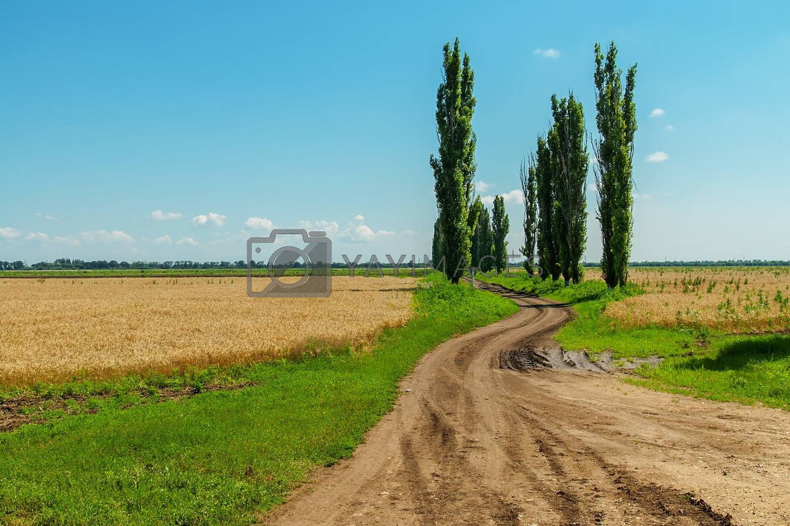 dirty road in agriculture fields