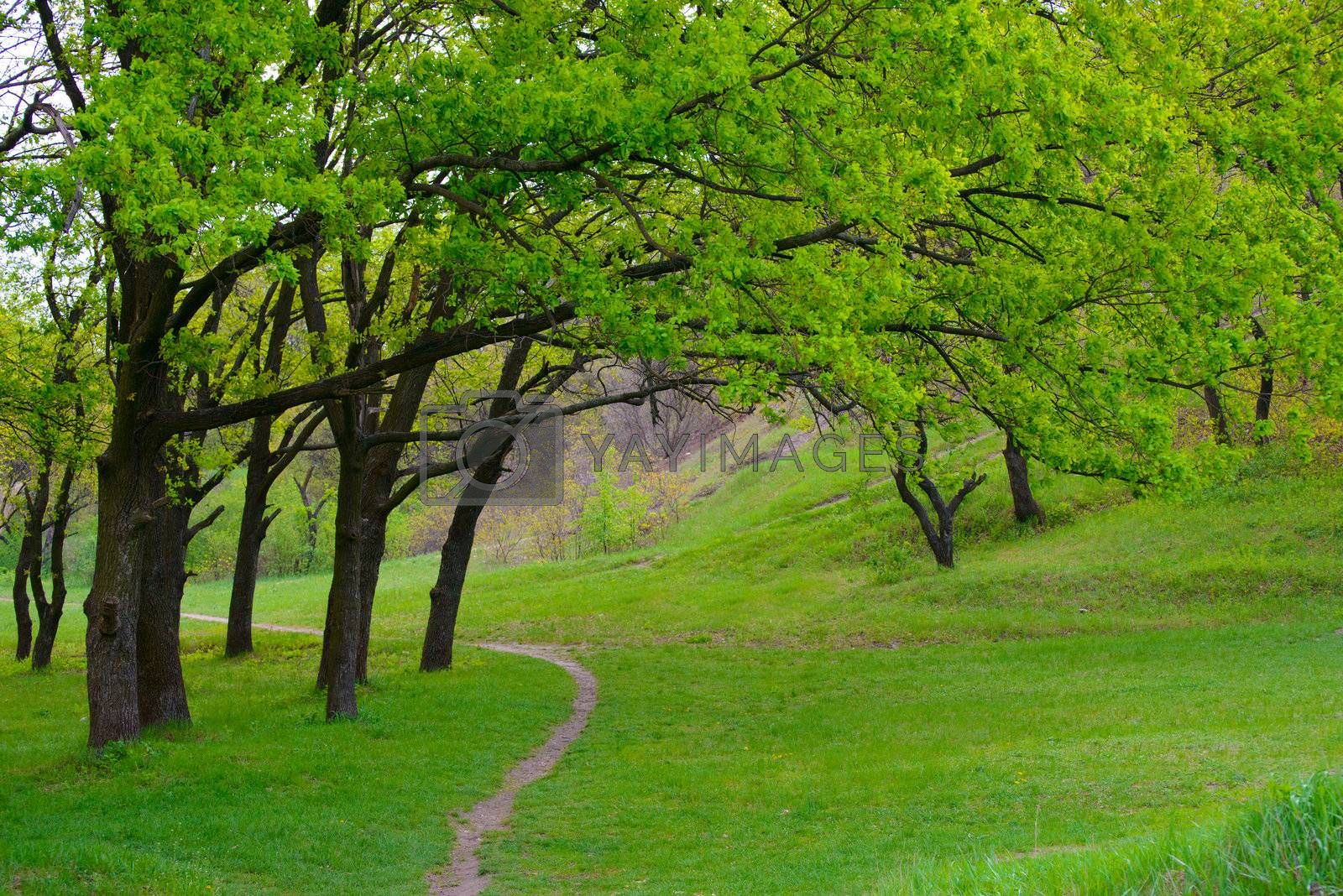 Spring green meadow with big oak trees and curly trail