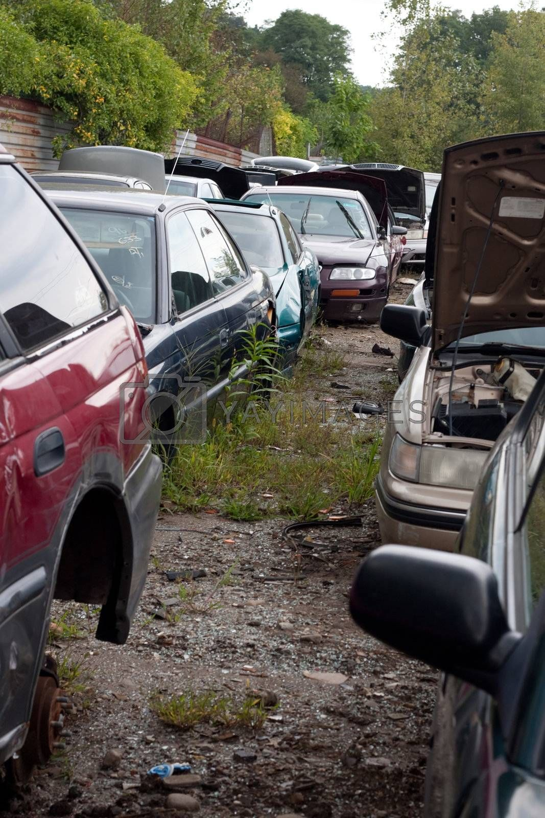Cars in the Junk Yard by graficallyminded