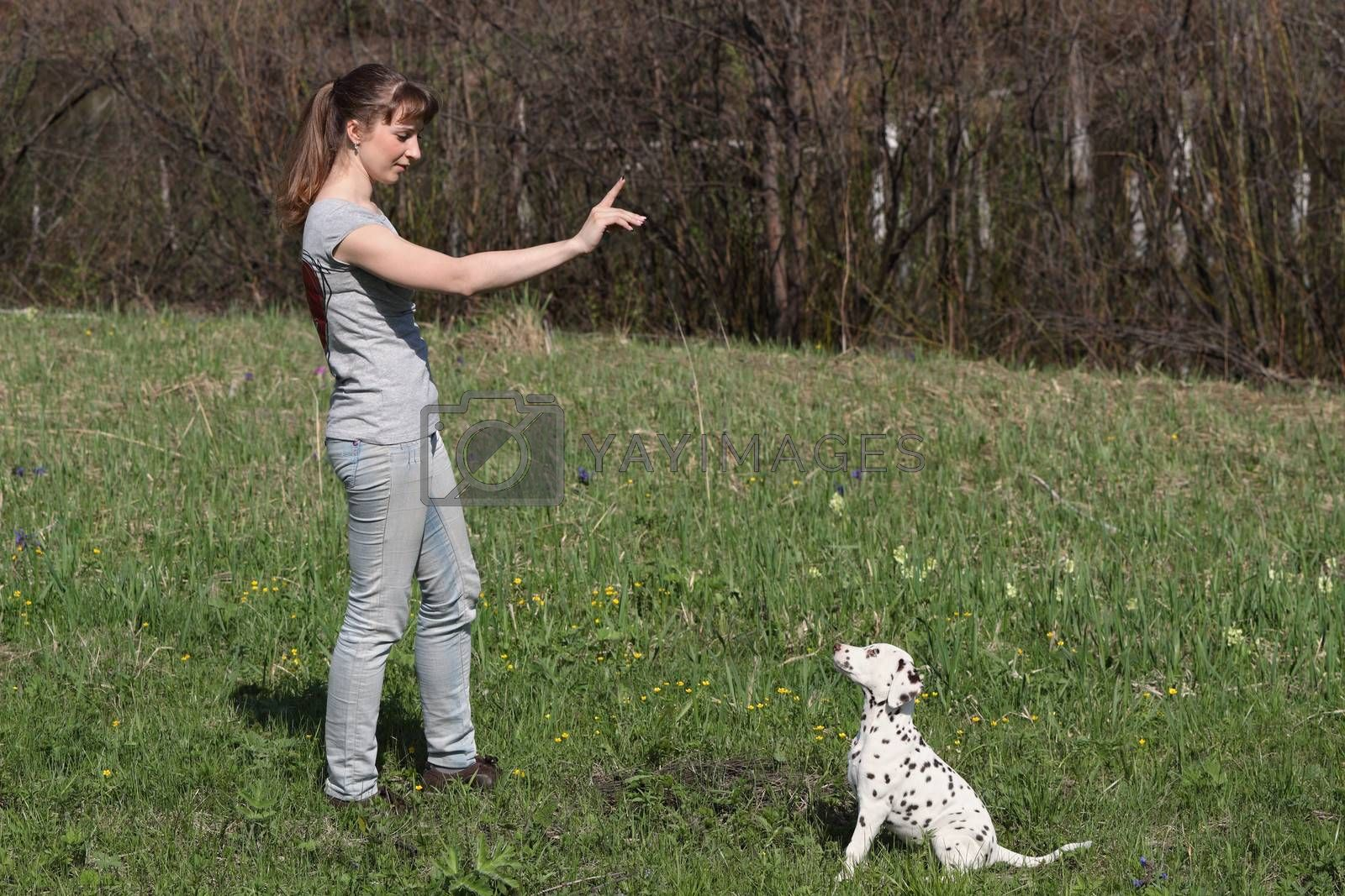 Girl training a little dalmatian puppy dog
