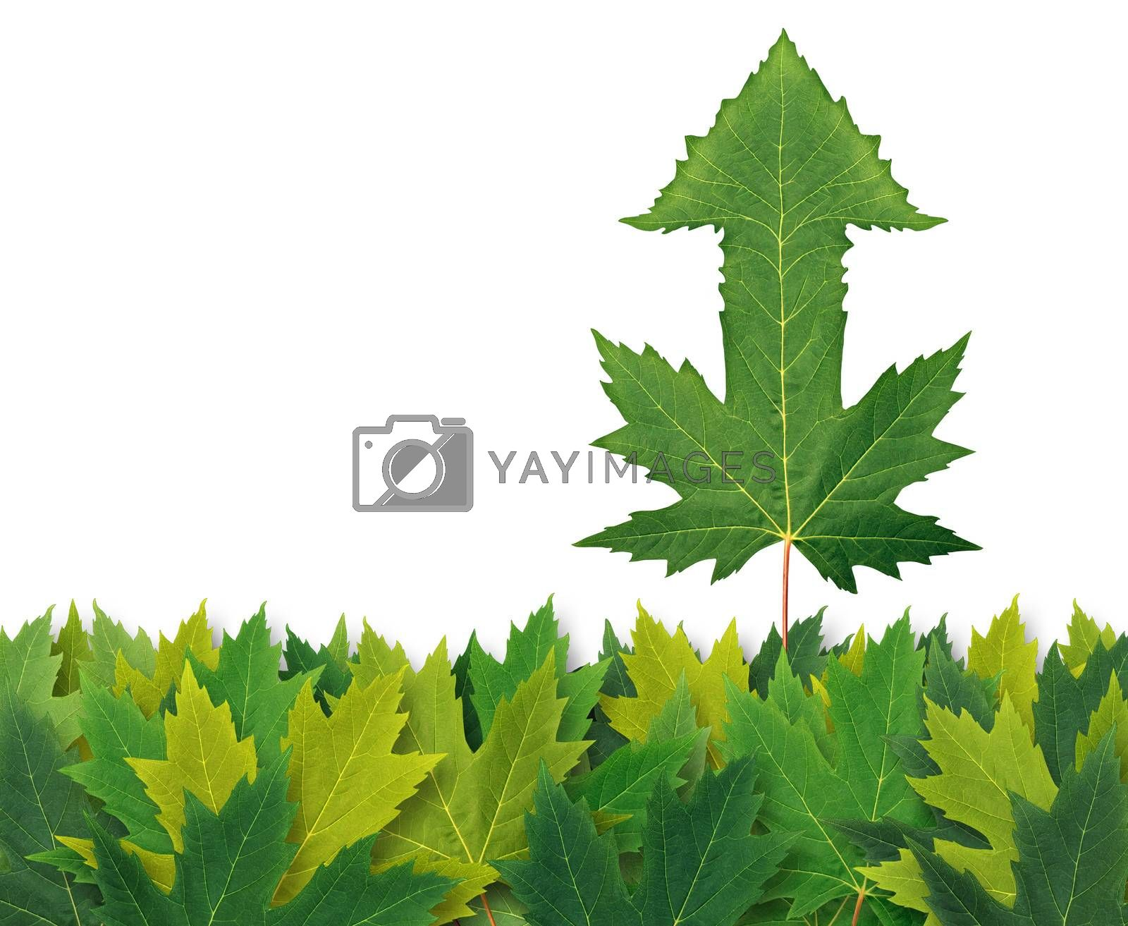 Best financial strategy with aan arrow leaf standing out from the crowd from a bunch of leaves as a business symbol of success and winning leadership.