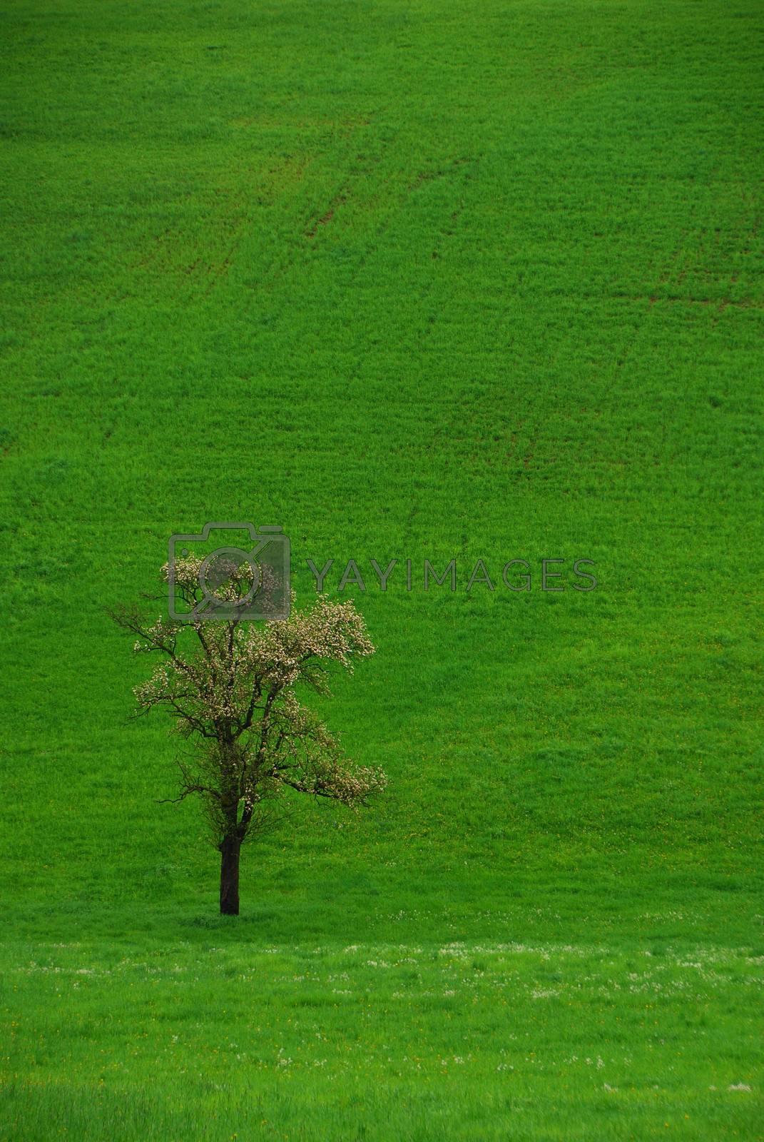single tree on a green meadow left portrait