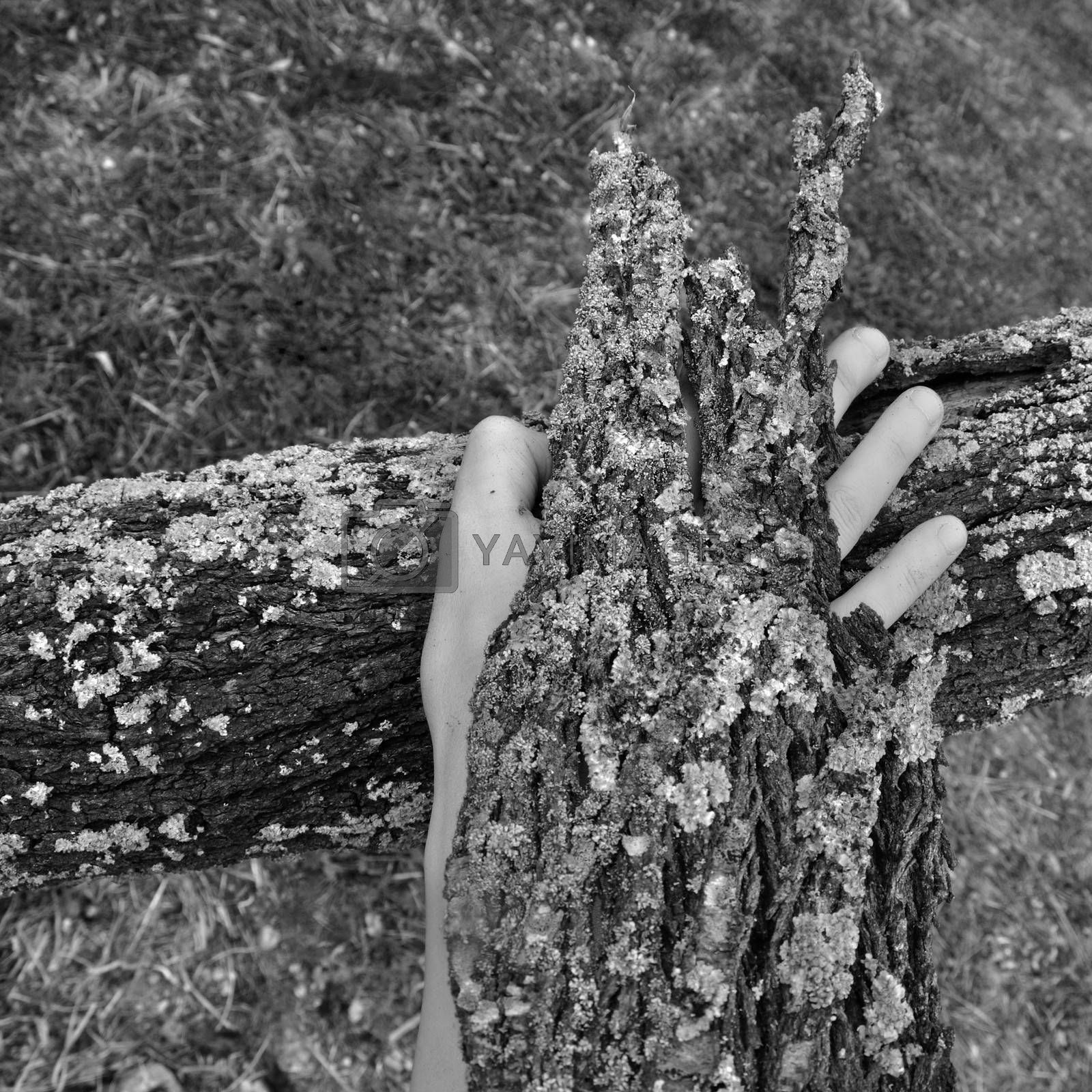 Bark peel covered hand and tree trunk with fungus texture. Black and white.