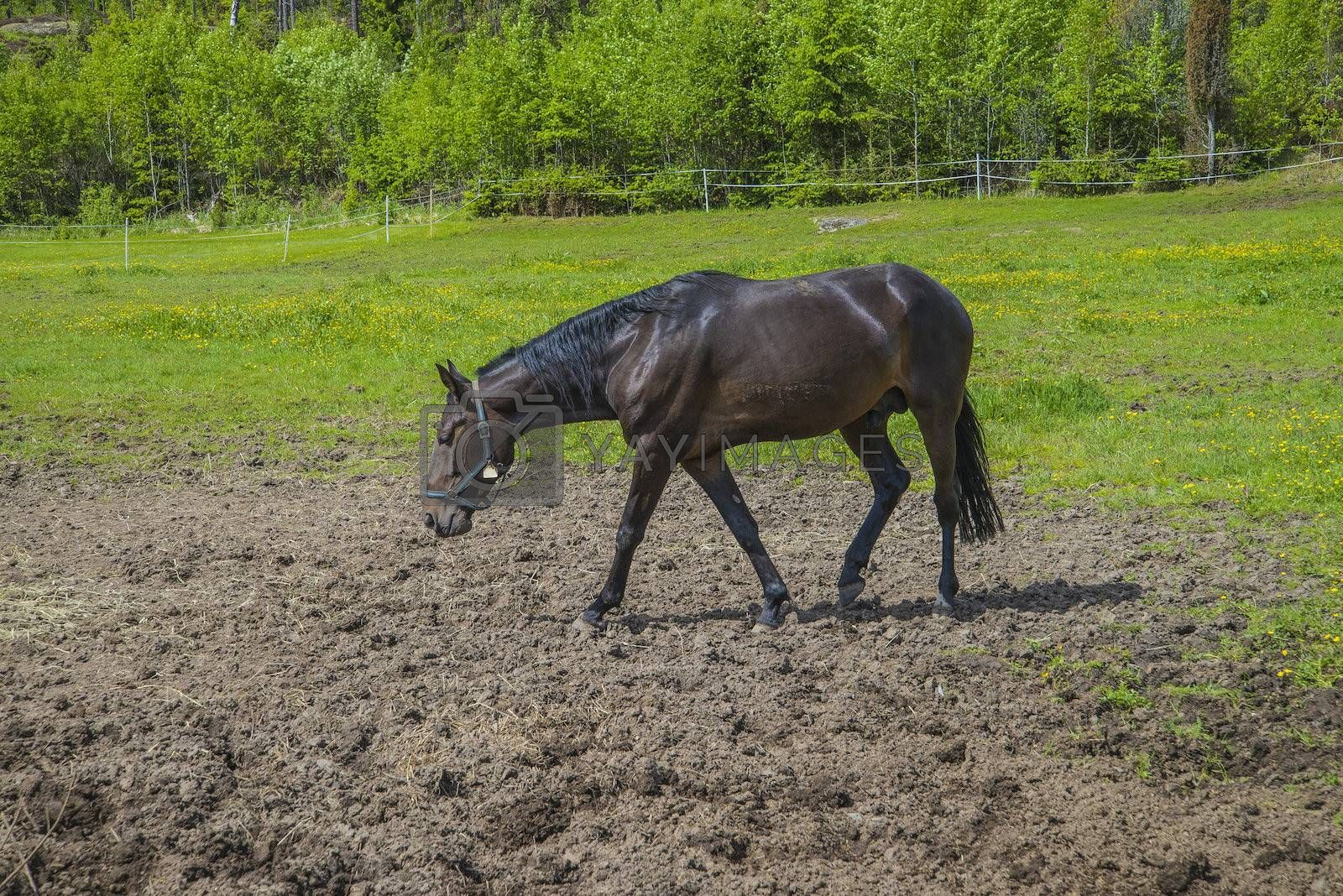 The image is shot at a farm in Aremark municipality that borders to Halden municipality, Norway