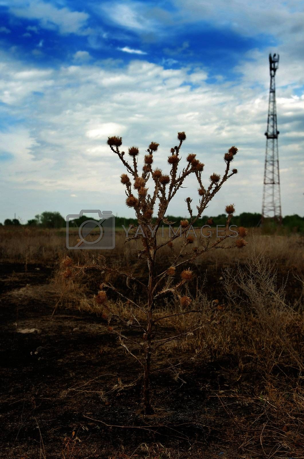 Thorn on the burnt soil and communication antenna as a symbol of environmental protection