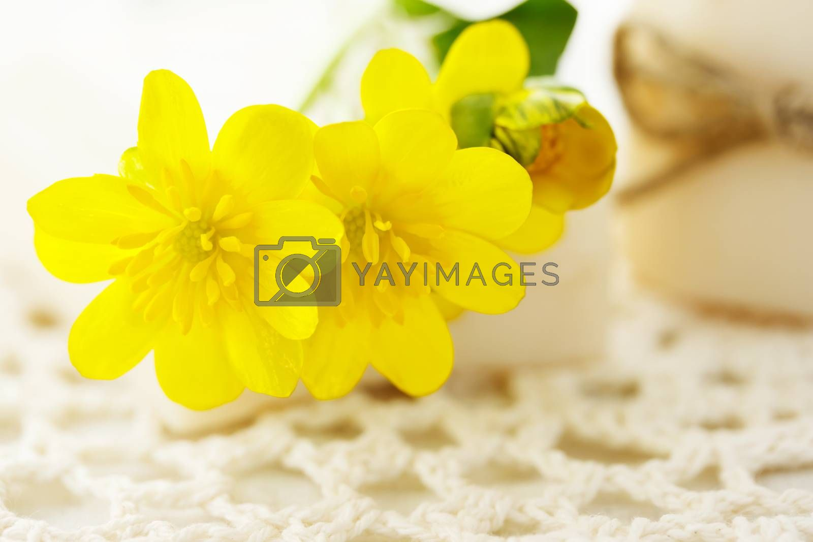 Royalty free image of Yellow flowers with bars of soap by melpomene