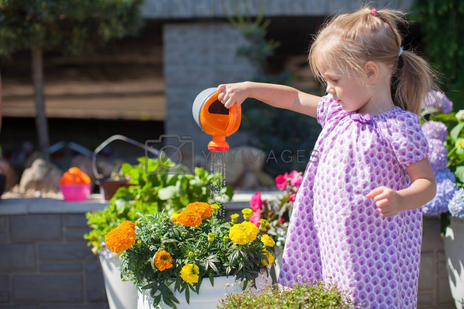 Royalty free image of Little nice girl watering flowers with a watering can by travnikovstudio