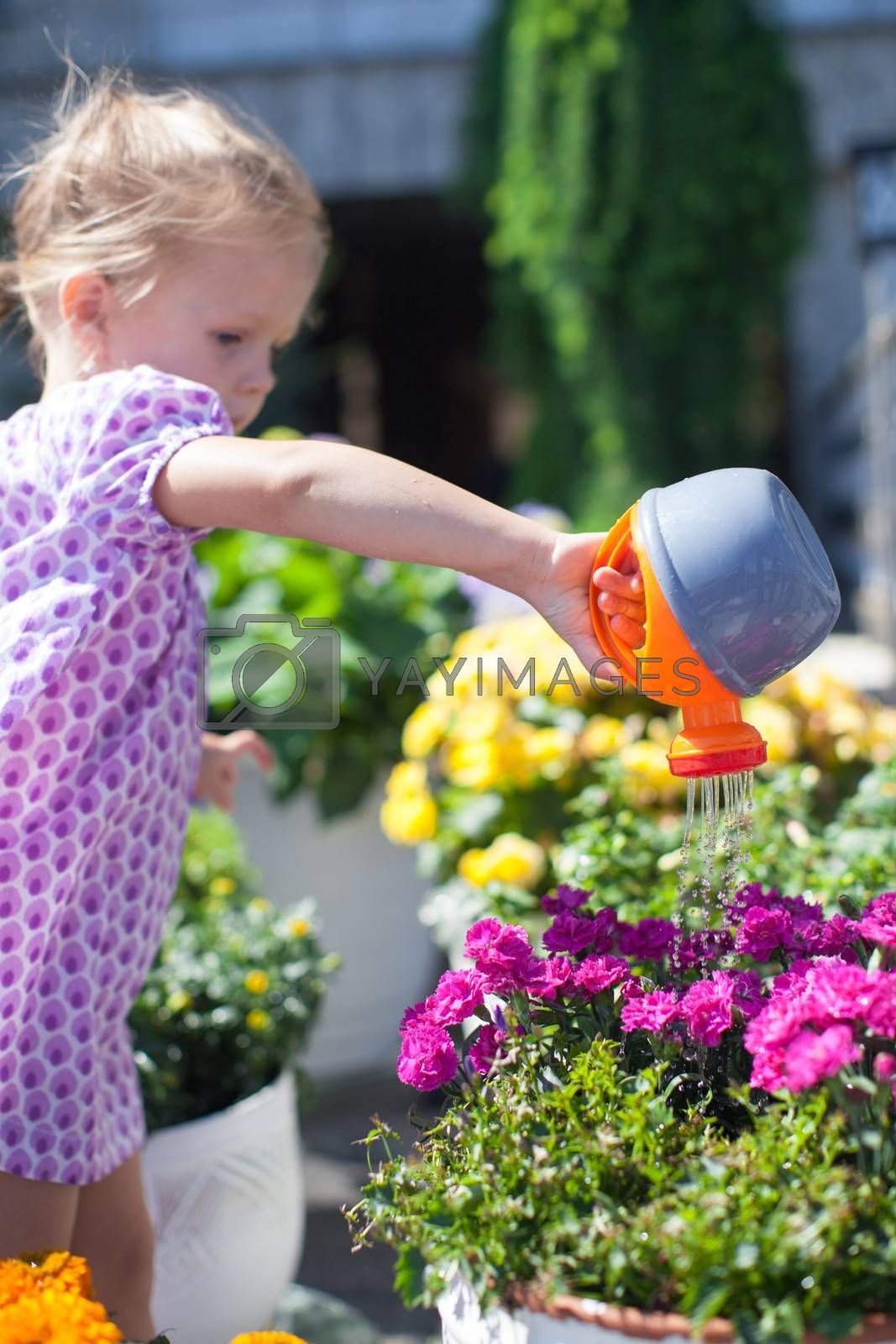 Royalty free image of Little cute girl watering flowers with a watering can by travnikovstudio