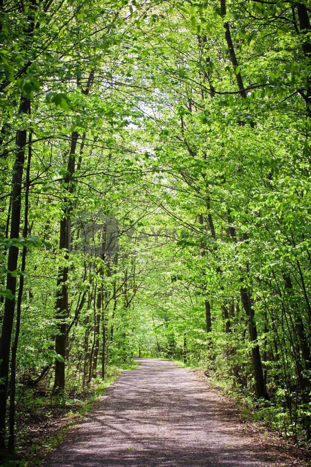 Royalty free image of Path in forest by aetb