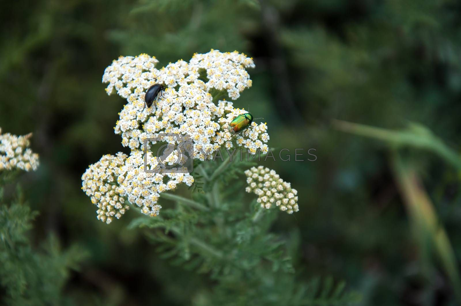 Royalty free image of Insects and plants by 0608195706081957