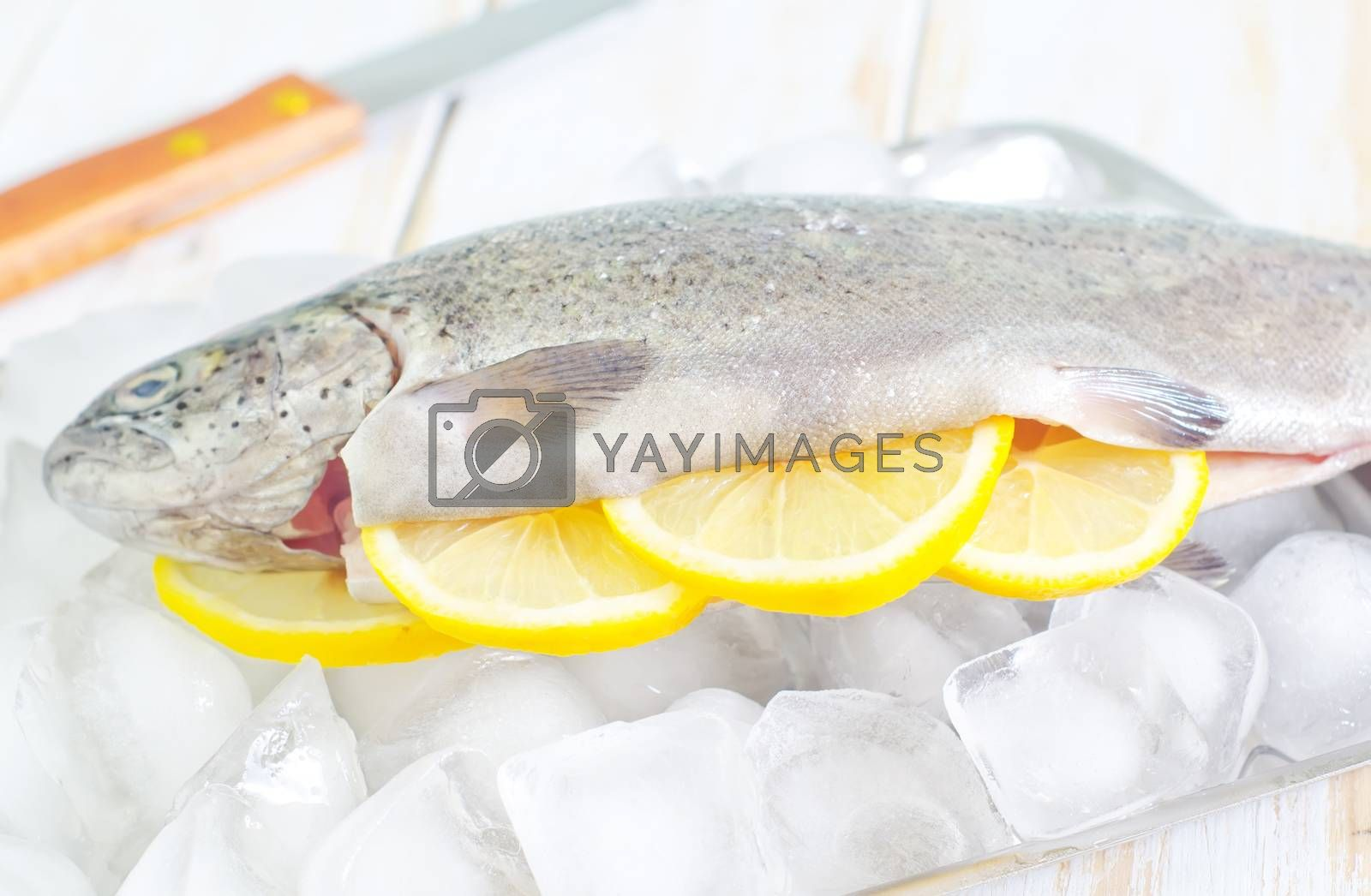 Royalty free image of raw trout by tycoon