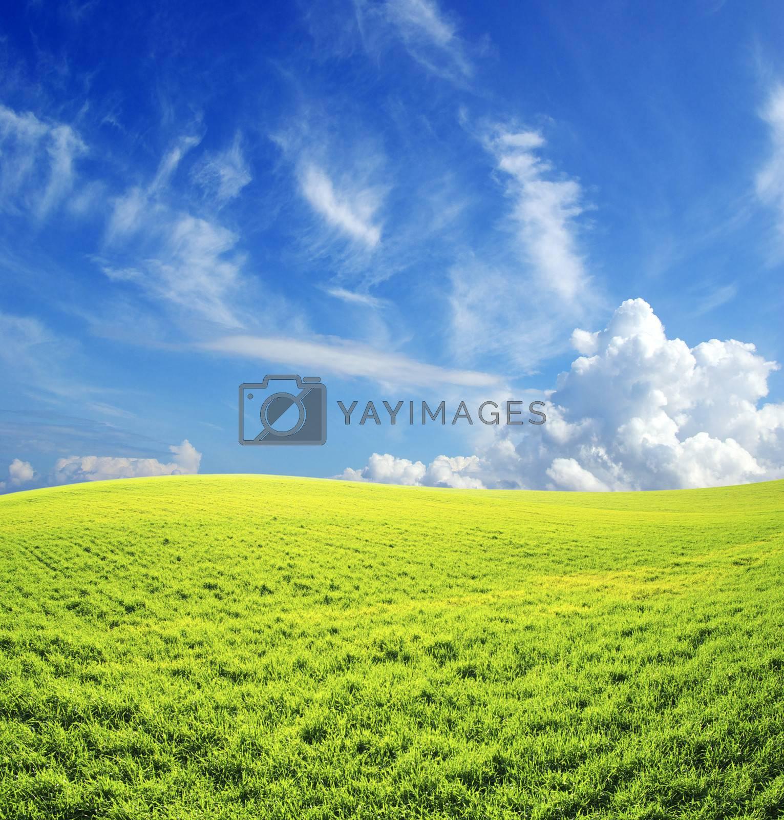 Royalty free image of field by Pakhnyushchyy