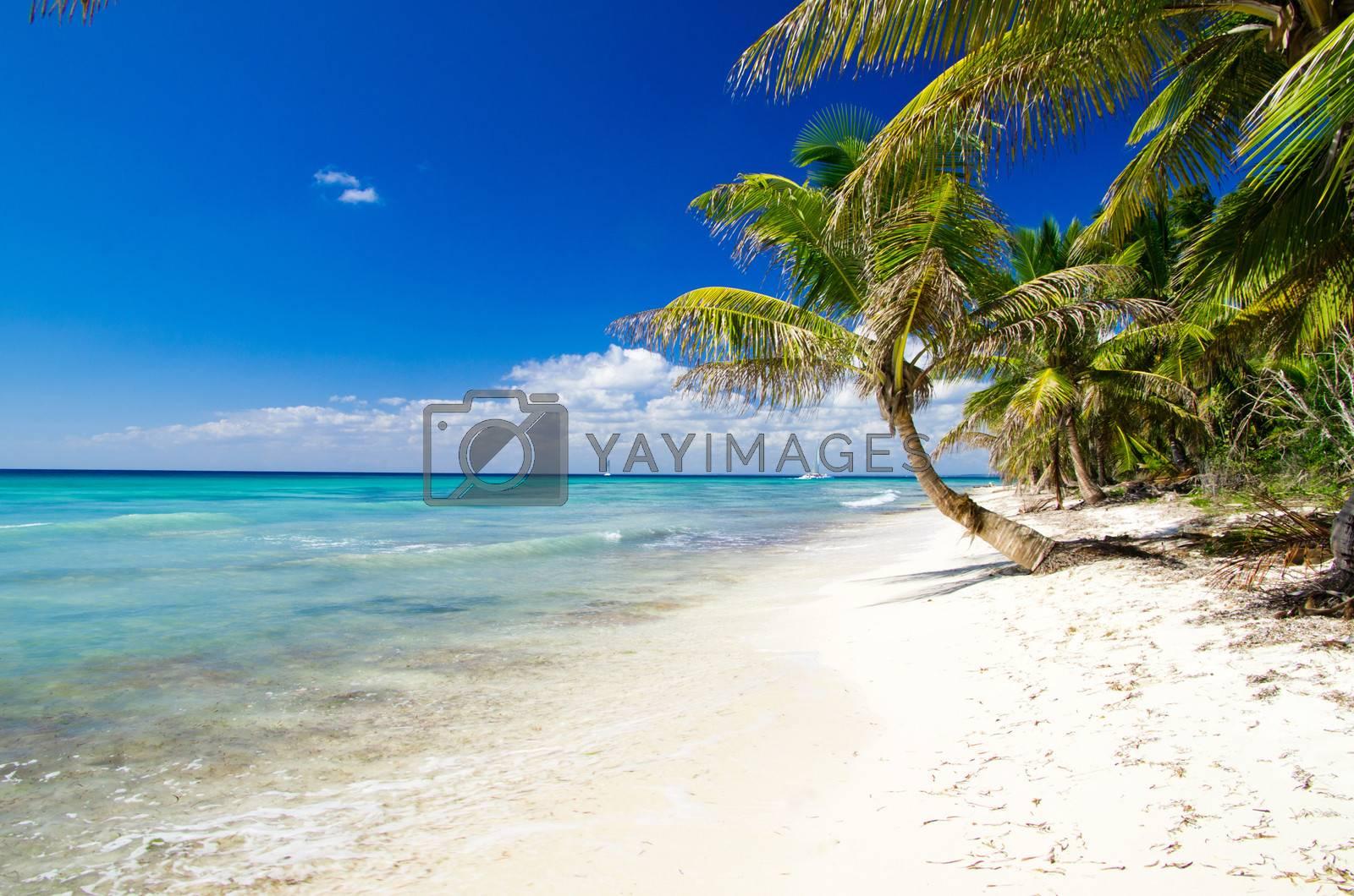 Royalty free image of tropical beach by Pakhnyushchyy