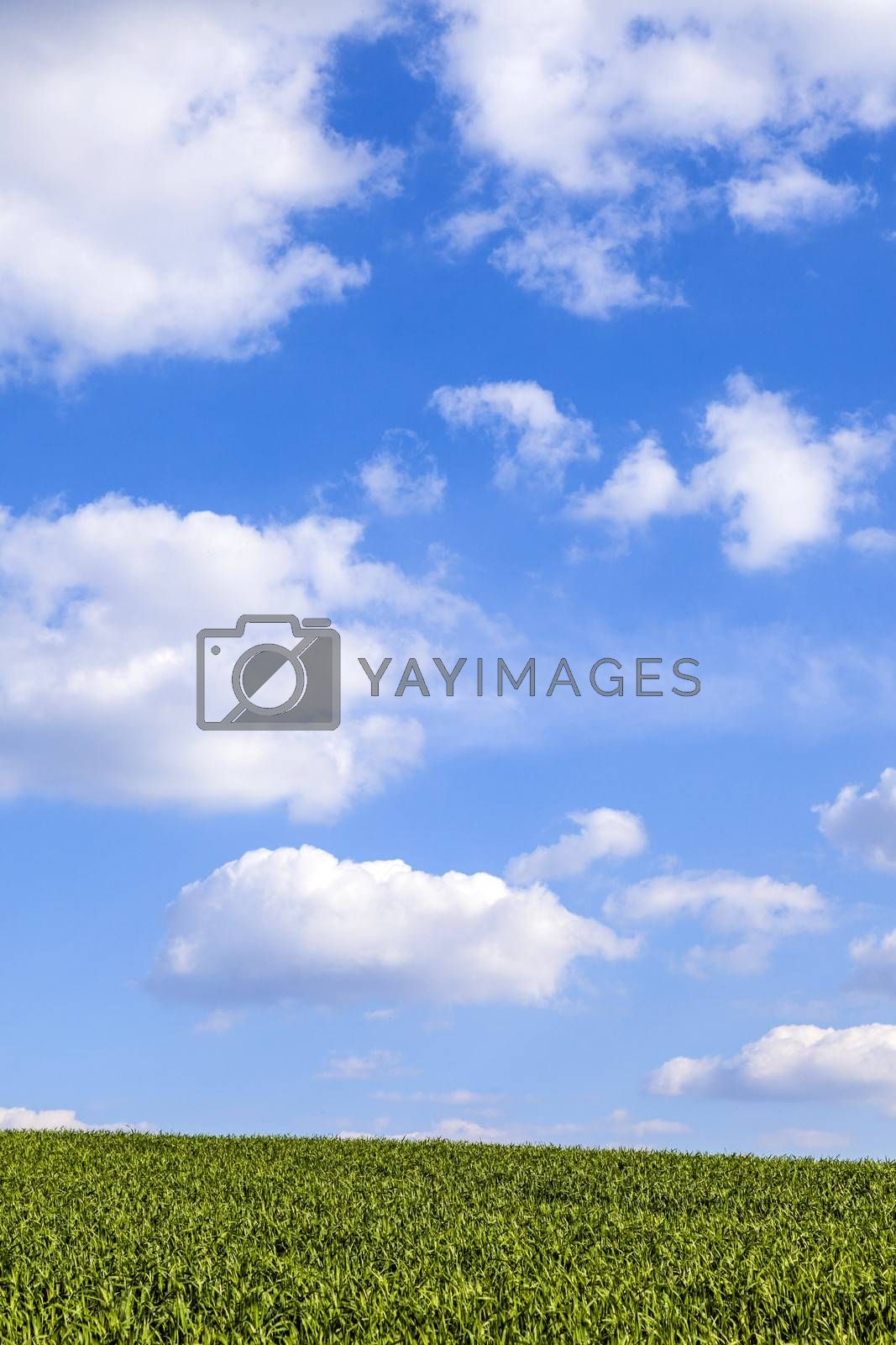Royalty free image of pattern of green field with blue cloudy sky by meinzahn