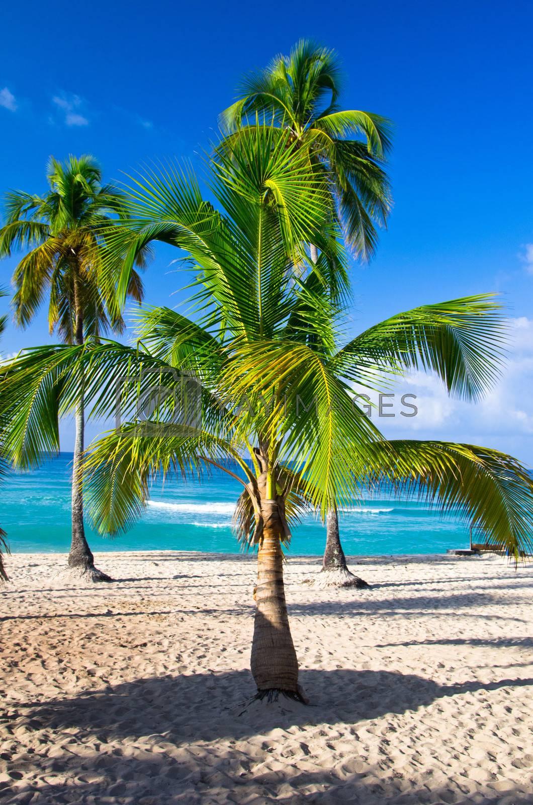 Royalty free image of  beach  by Pakhnyushchyy