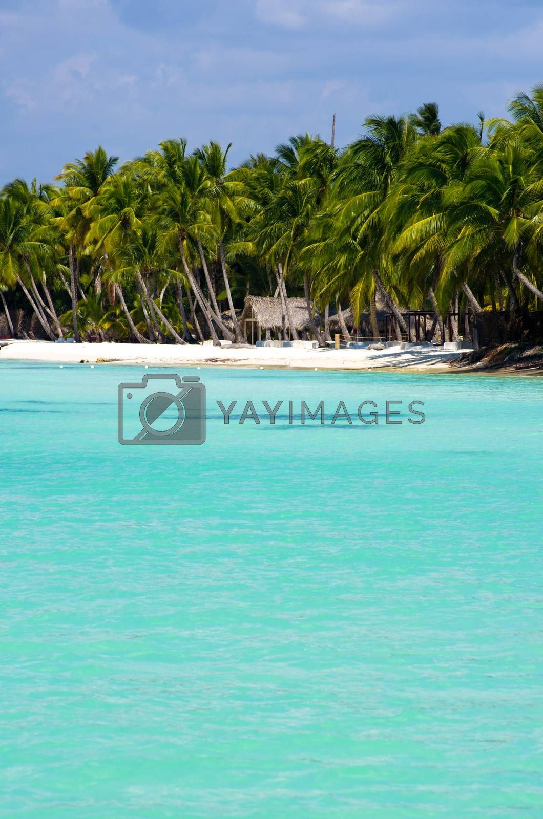 Royalty free image of tropical sea by Pakhnyushchyy