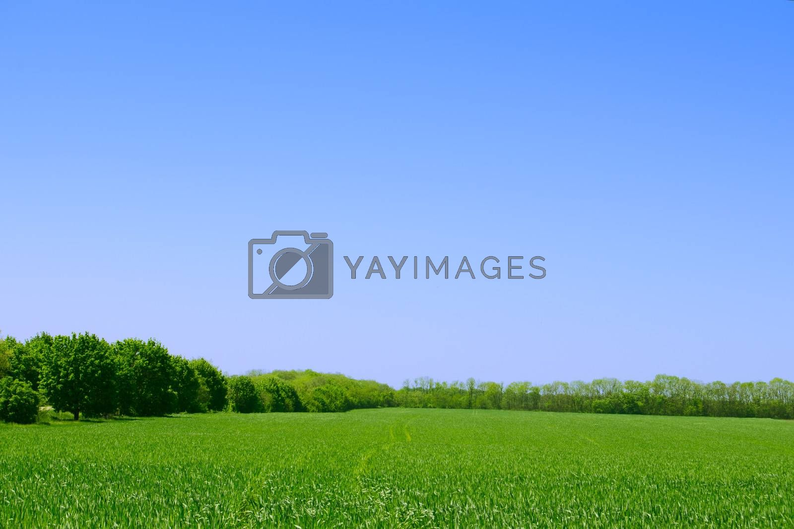 Green Field, Forest and Blue Sky. Summer Landscape Background by maxpro