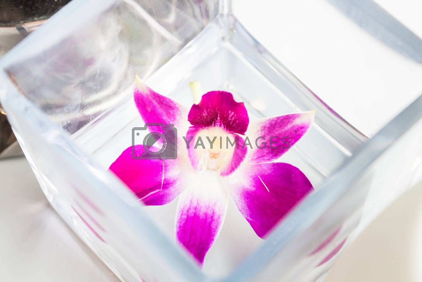 Beautiful violet and white orchid flower on water box
