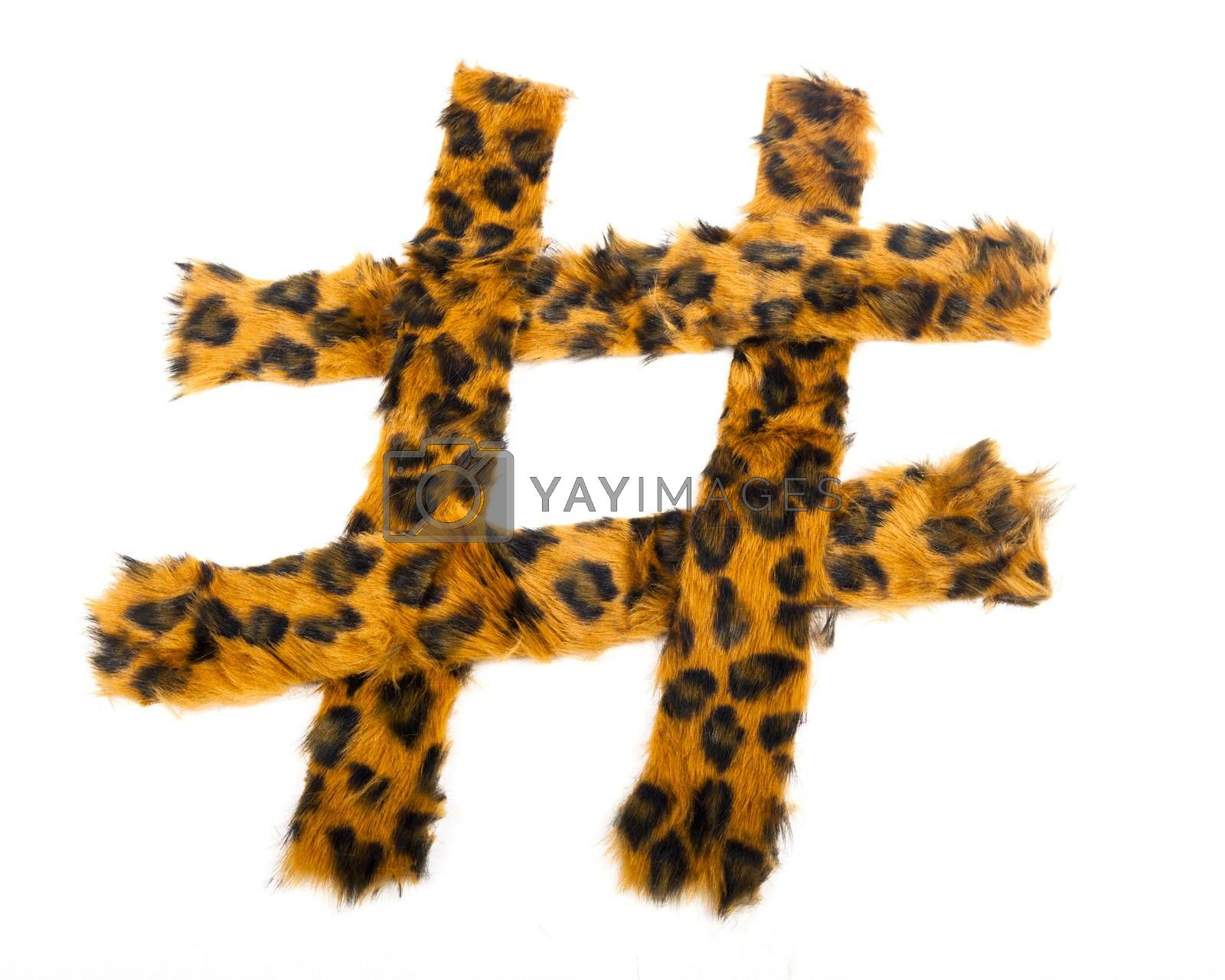 Royalty free image of Leopard Hashtag by mothy20