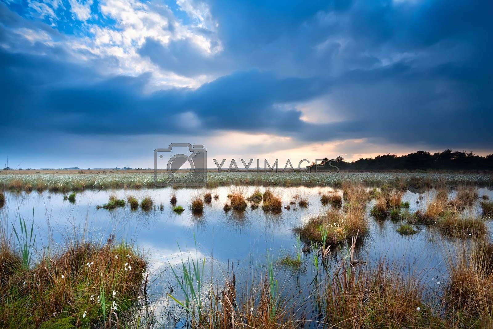 tranquil weather over swamp before sunset