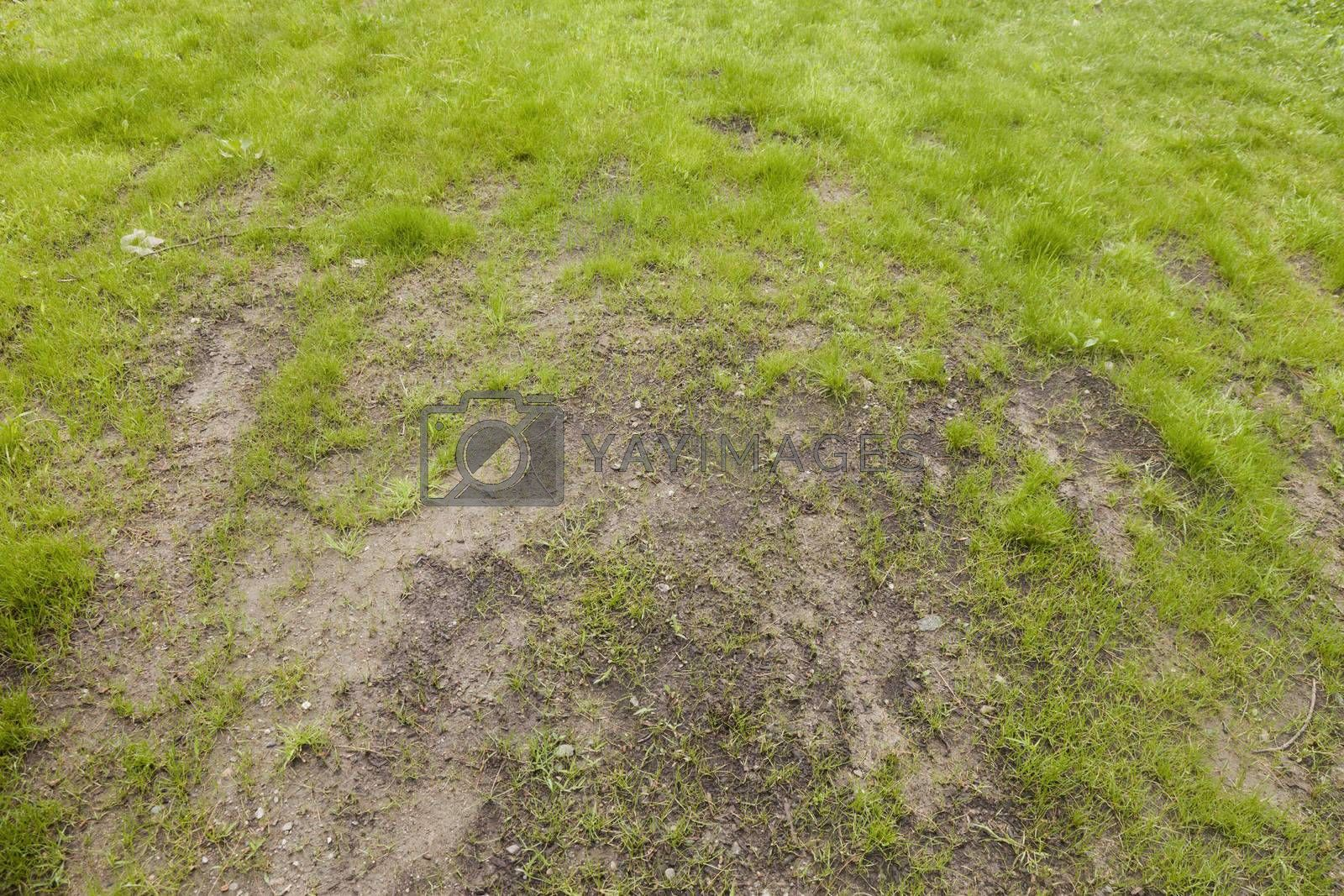 Royalty free image of Bad Lawn Care by mothy20