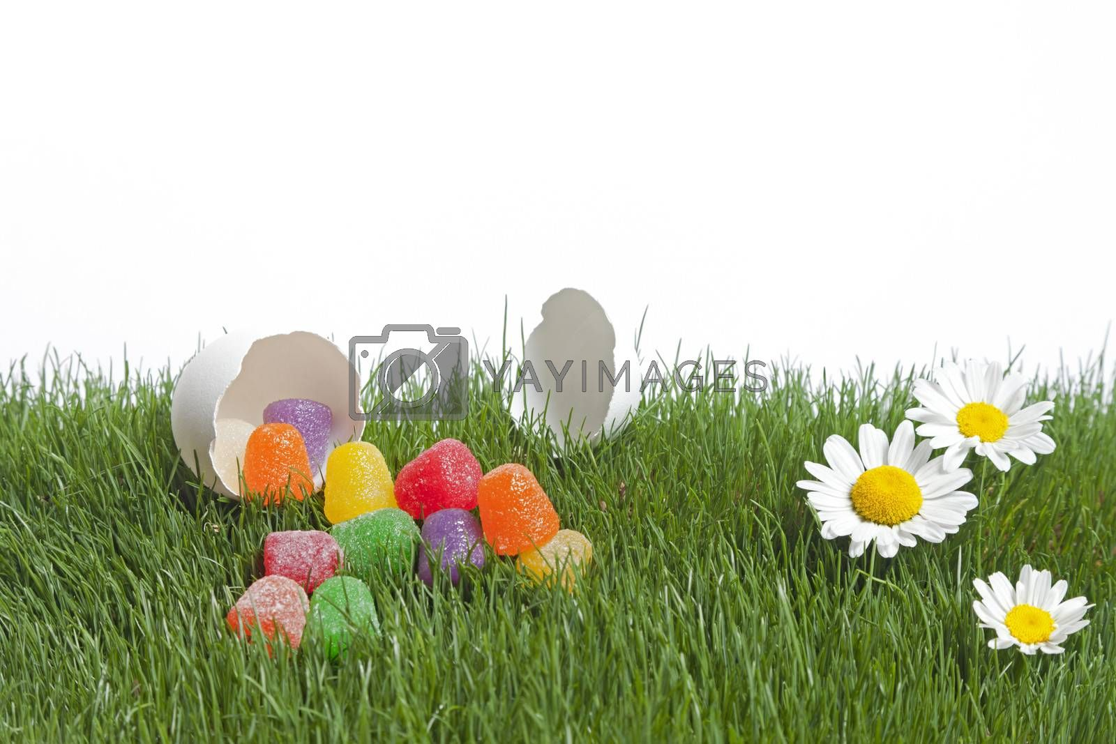 Royalty free image of Easter Surprise by mothy20