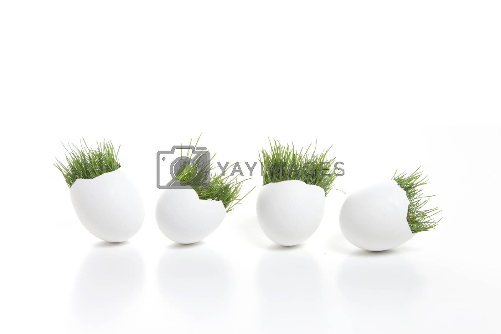 Royalty free image of Spring Eggs by mothy20