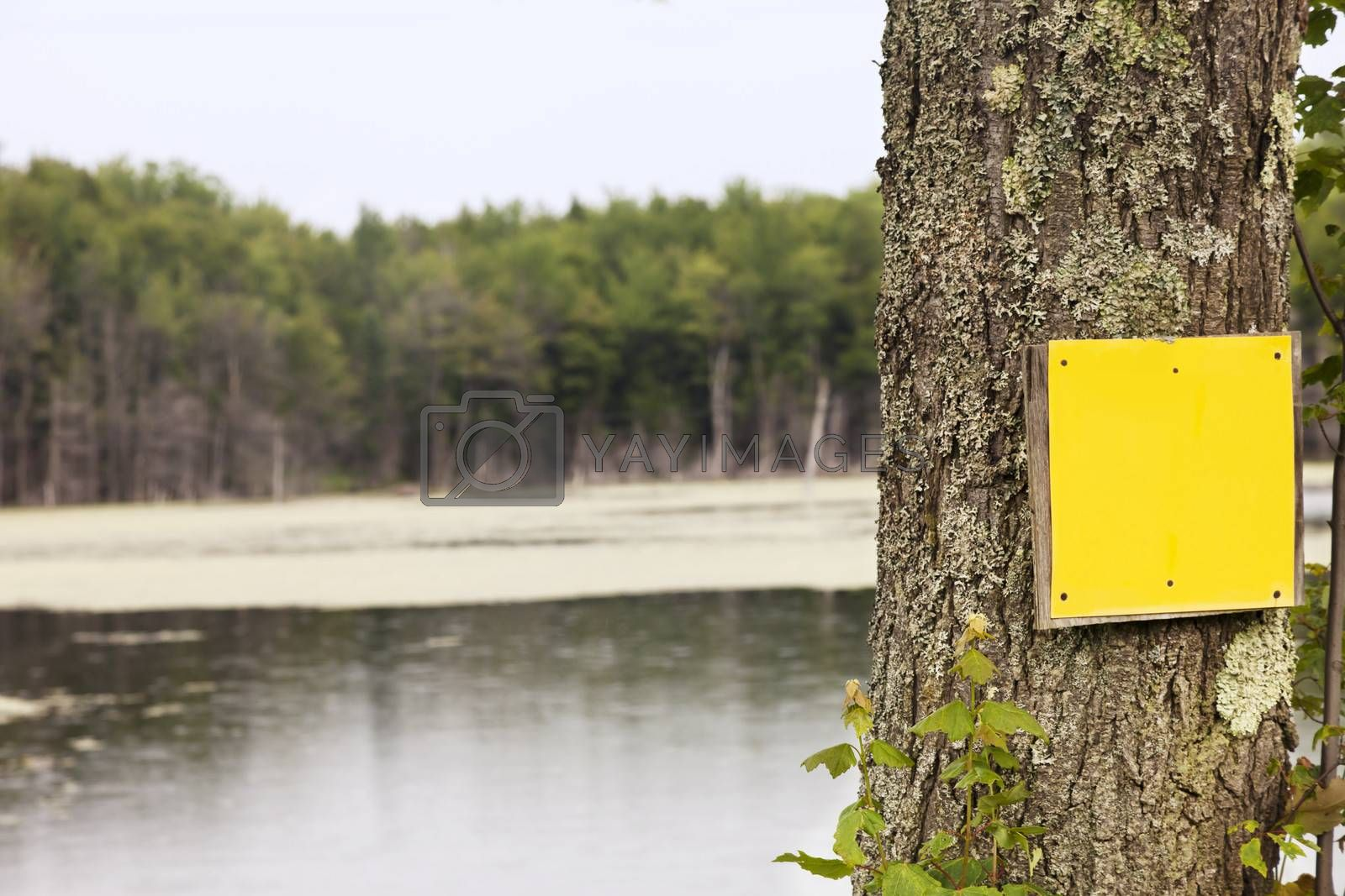 Royalty free image of Rural Yellow Sign by mothy20