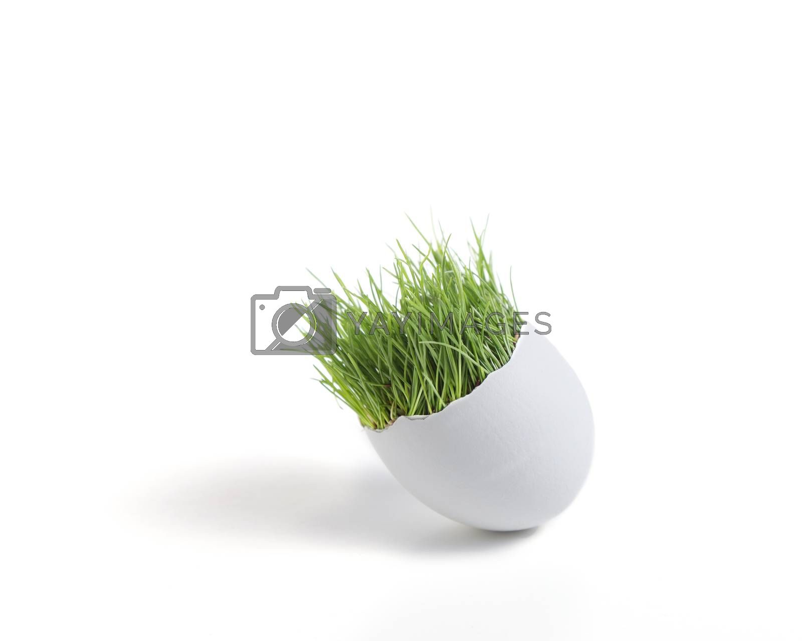 Royalty free image of Spring Egg by mothy20